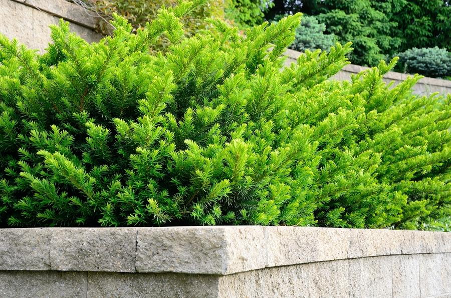 Trees Amp Shrubs Galles Greenhouse